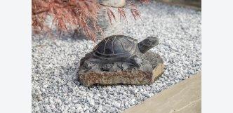 želva na kameni