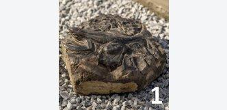 ještěrka na kameni